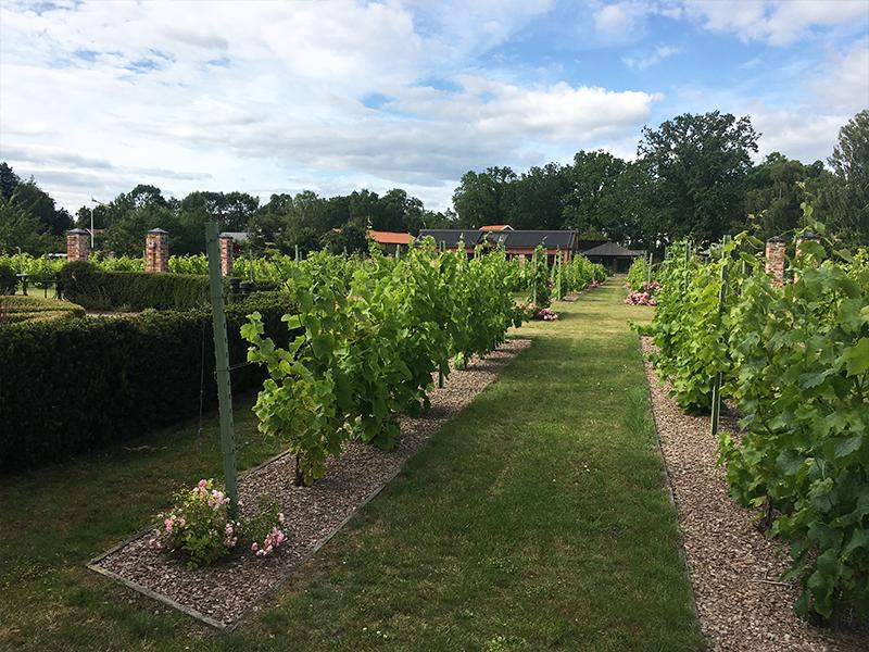 åmund vin och fruktgård